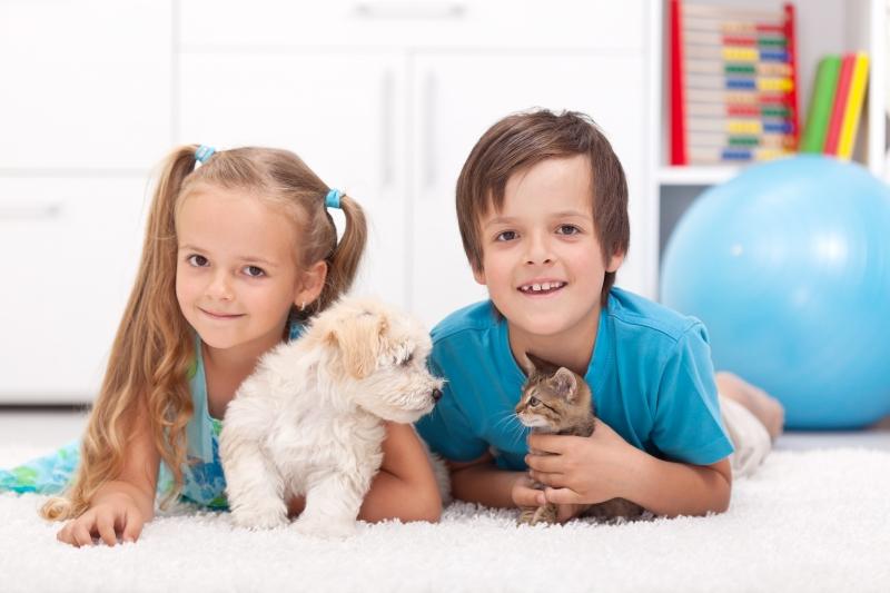 Glatt med husdjur